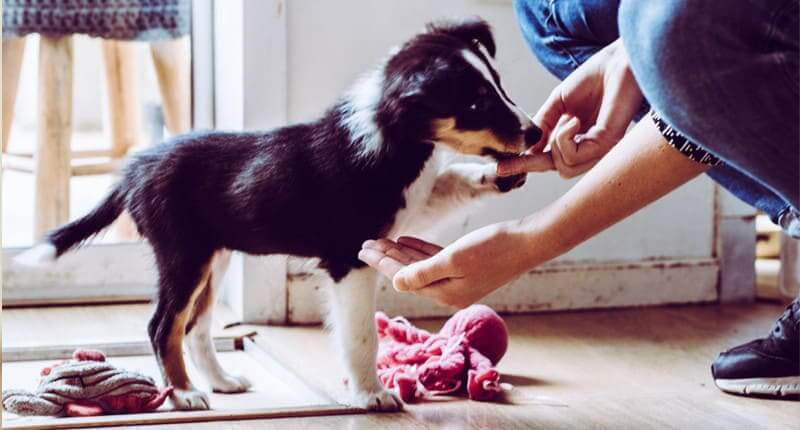 5 Mistakes That First-Time Puppy Owners Should Avoid