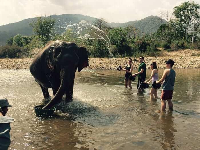 象のように見える水