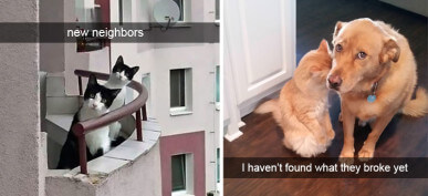 40+ Hilarious Cat Snapchats That Will Bring A Smile To Your Face