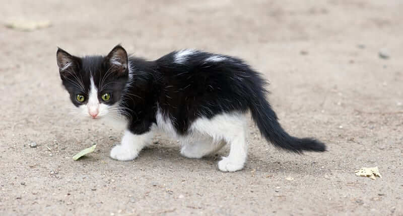 Step-By-Step Guide on What To Do When You Find a Stray Kitten
