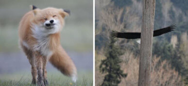 30+ Hilarious Wildlife Photos Captured At The Wrong Moment