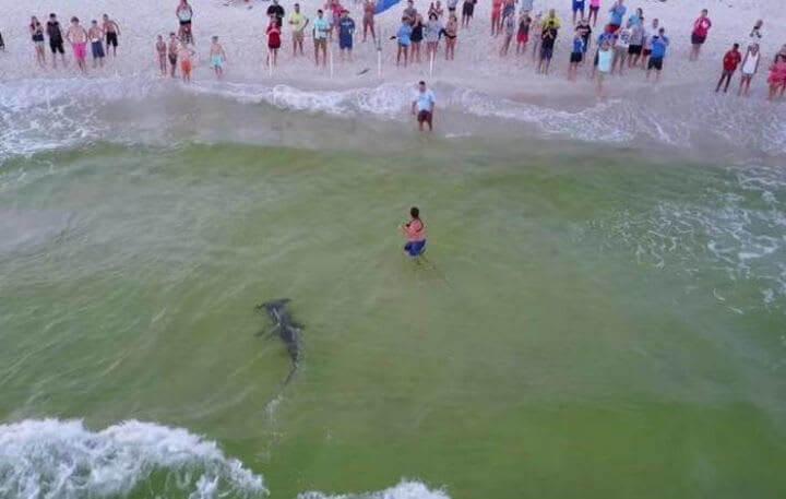 الصياد و القرش المطرقة