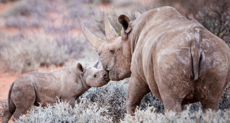 These 10 Animals Are Sadly On The Brink Of Extinction