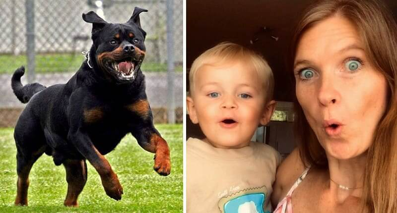 These 40+ Dog Breeds Are Too Dangerous To Have Around The House