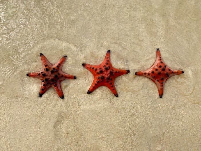 Starfish With 6, 5 And 4 Arms