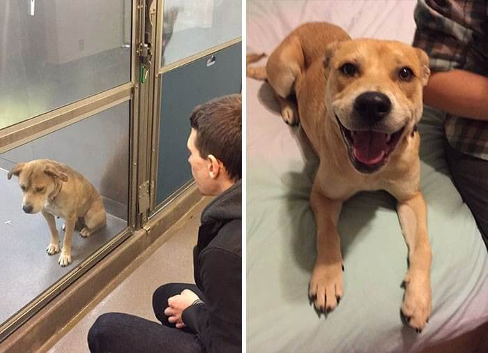 Only One Day After She Was Adopted, What A Difference!