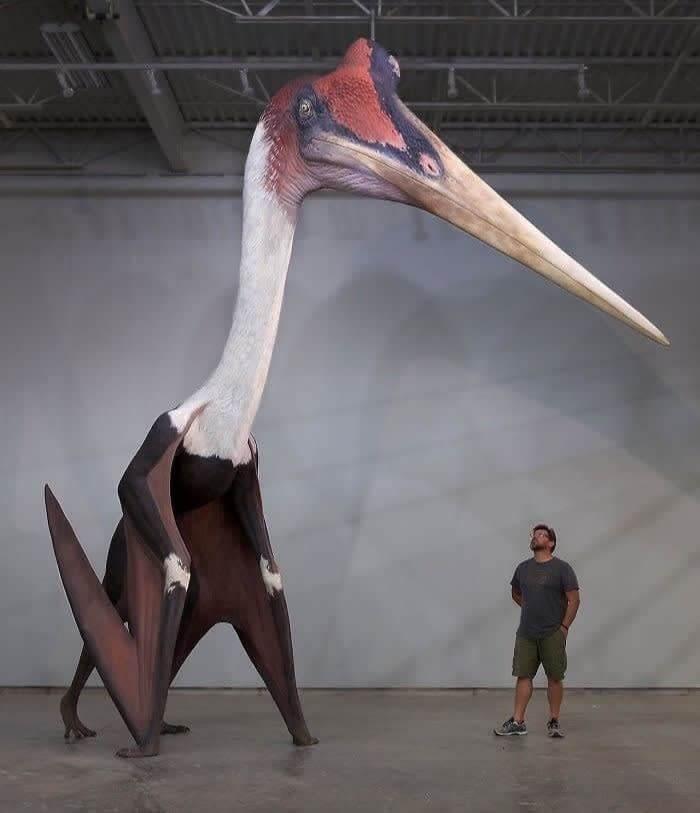 Quetzalcoatlus Northropi Model Next To A 1.8m Man