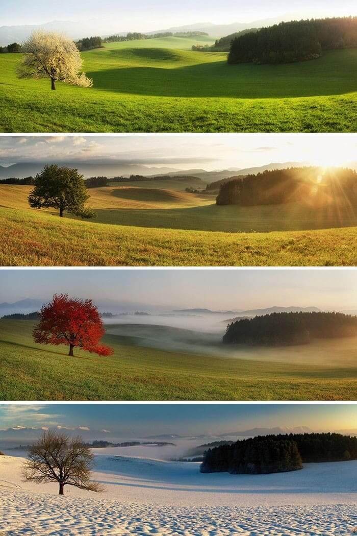 Same Tree, Four Seasons