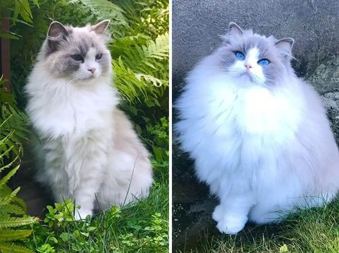 That's One Majestic Floof