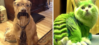 30+ Hilarious Photos That Are A Must-See For Any Animal Lover