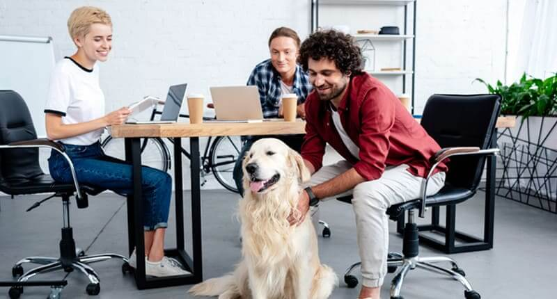 The Do's And Don'ts Of Bringing Your Dog To Work