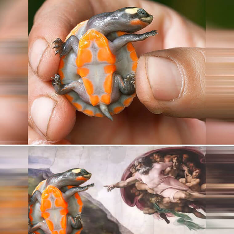 Descripción: Creation of Turtle