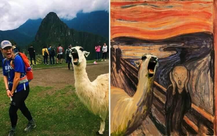Descripción: Llama Attack?
