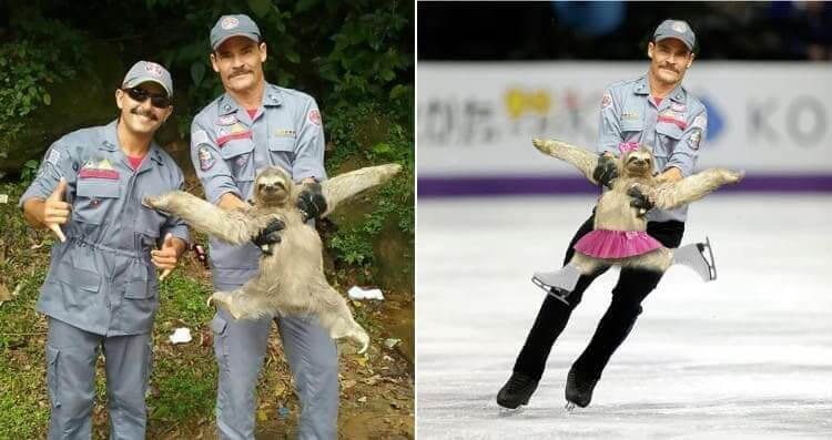 Descripción: The Ice Skater Sloth