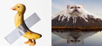 45 Hilarious Pictures Of Animals Edited Into Random Objects