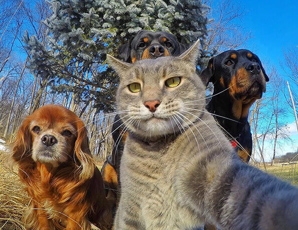 Just Chillin' It With My Dogs
