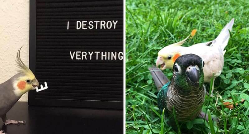 50 Hilariously Rude Birds That Will Have You Quacking Up