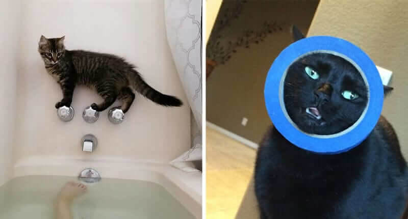 50 Silly Cats Who Got Themselves Into Some Interesting Situations