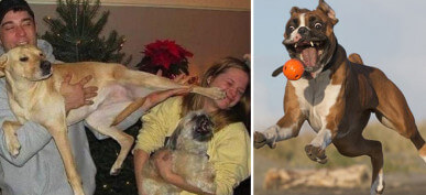 Only Animal Lovers Will Understand These 50 Perfectly Timed Photos Of Ridiculous Pets