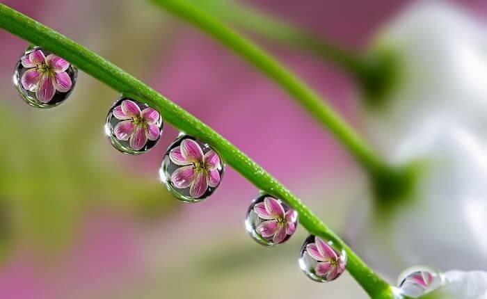 Pequenas Flores Em Cada Gota