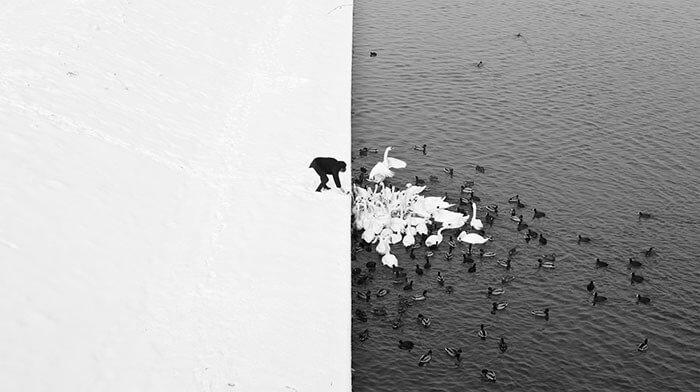 O Gelo Está Quebrando Ou São Só Cisnes Famintos?
