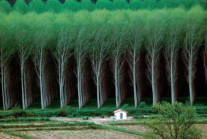 A Floresta Dos Sonhos Dos Perfeccionistas