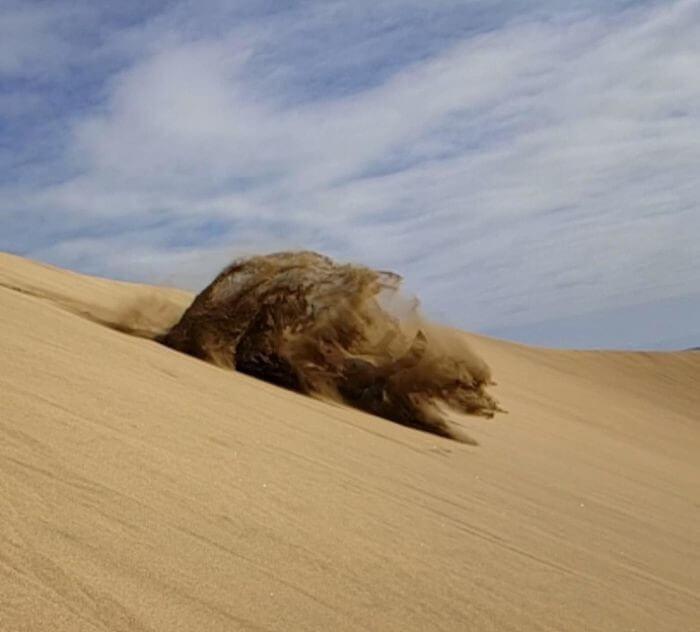 Corra Por Sua Vida, É Um Urso De Areia