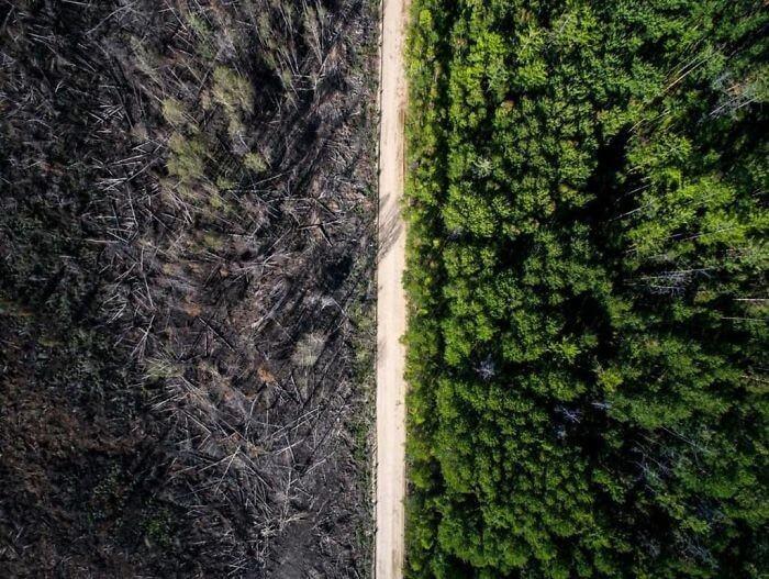 A Estrada Que Derrotou O Incêndio Florestal