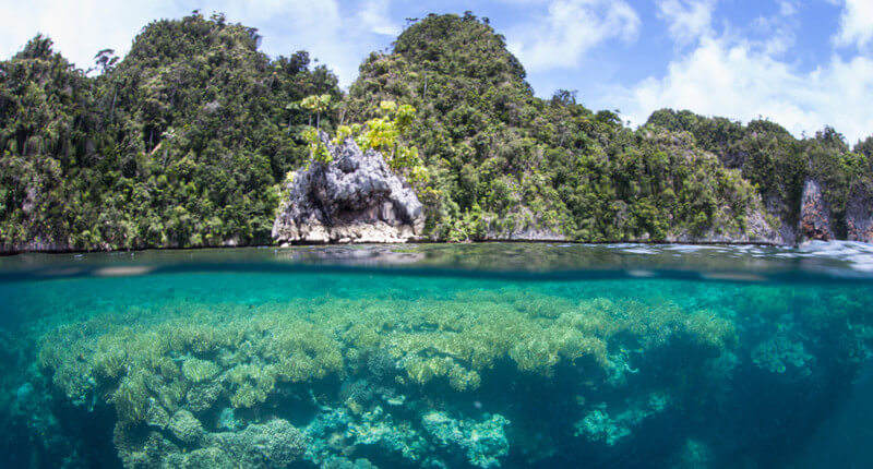 These Are The 10 Most Biodiverse Countries On The Planet