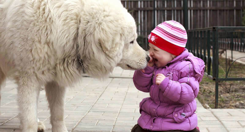 Pictures That Show Kids and Dogs Are Meant For Each Other