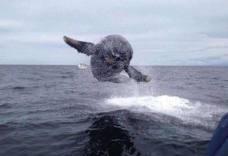 A Baleia Ginastica