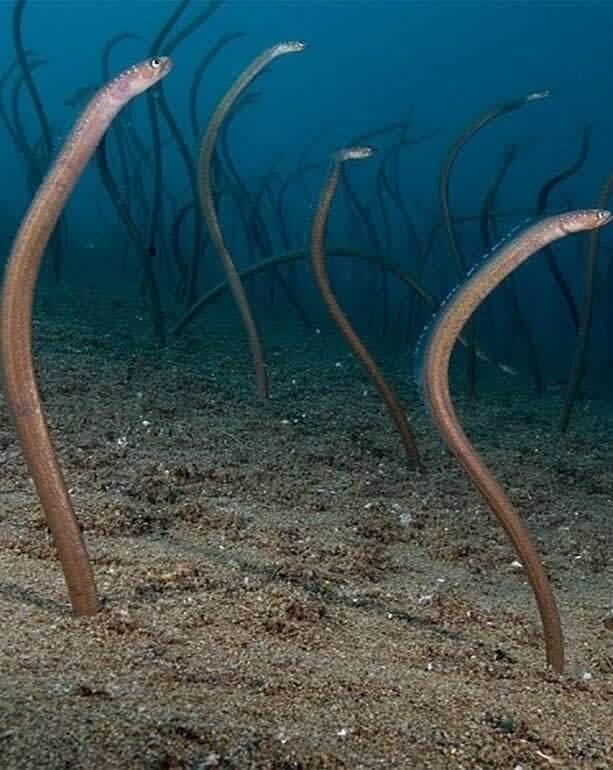 Cobras do Mar ou Algas