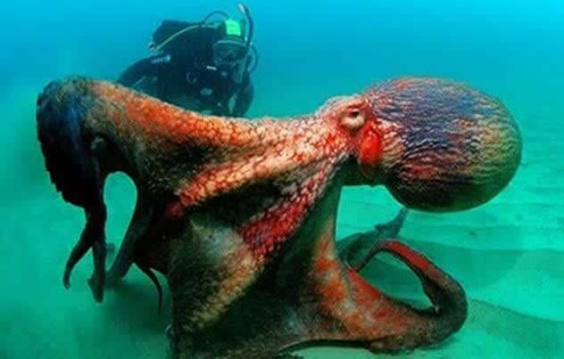 Tentáculos Tentadores
