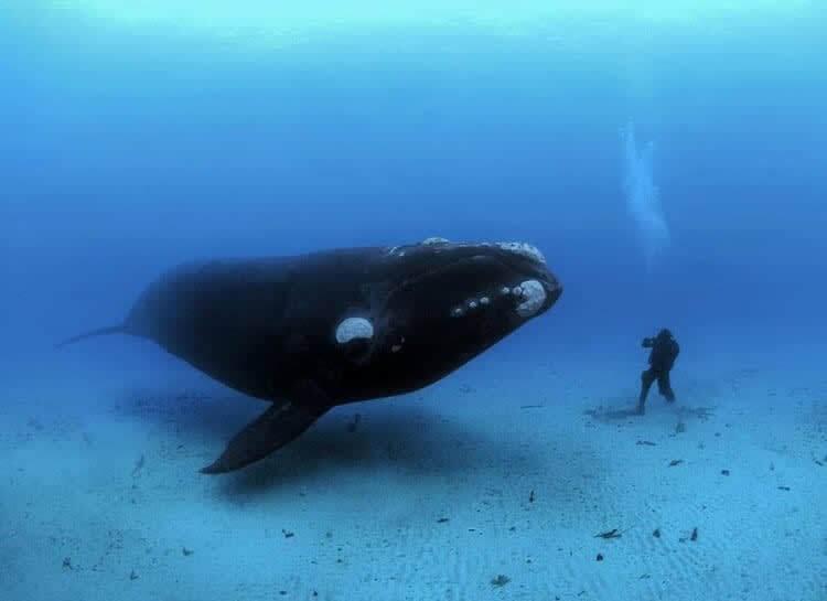 Mamíferos Massivos Debaixo D'água