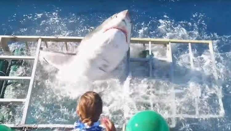 Os Tubarões Estão Revidando