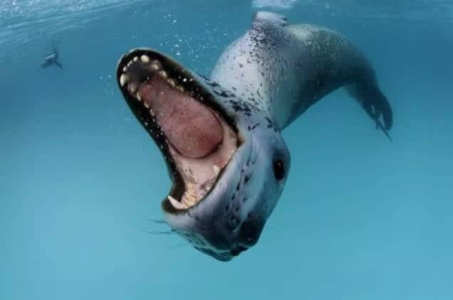 Monstro Marítimo Ou Leão Marinho Amigável