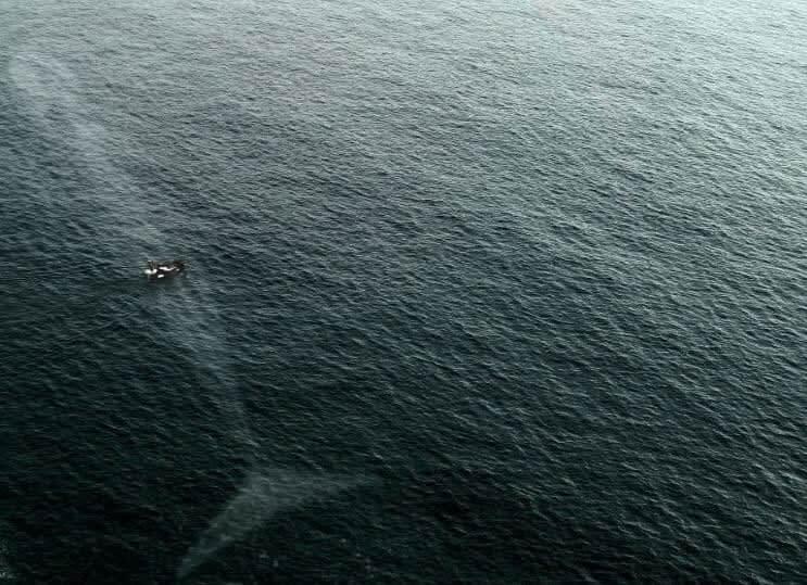 O Oceano e Suas Criaturas Gigantes