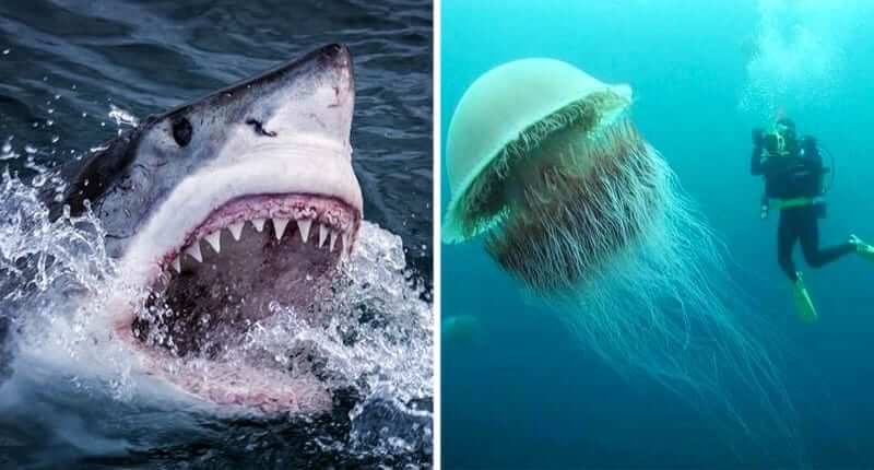 30+ Mind Blowing Pictures That Will Make You Think Twice About Swimming In The Ocean