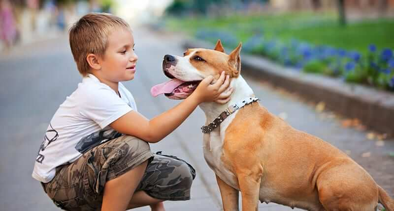 How To Train Your Dog To Be Child Friendly