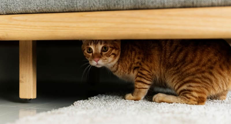 6 Signs Your Cat Is Stressed