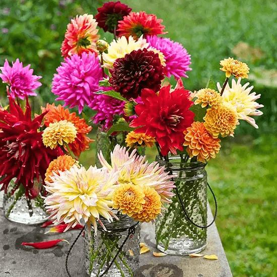 Mantén Tus Flores Siempre Frescas