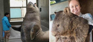 40+ Animals You Had No Idea Were Actually Shockingly Massive