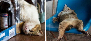 30+ Adorable Cats That Fell Asleep In Bizarre Places
