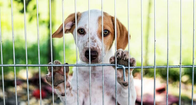 Is Now The Right Time For You To Adopt A Dog?