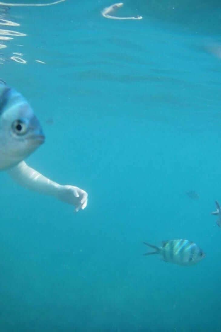 Os Peixes Começaram A Desenvolver Braços Humanos