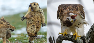 40+ Hilarious Wildlife Photos That Will Never Make The Cover Of National Geographic