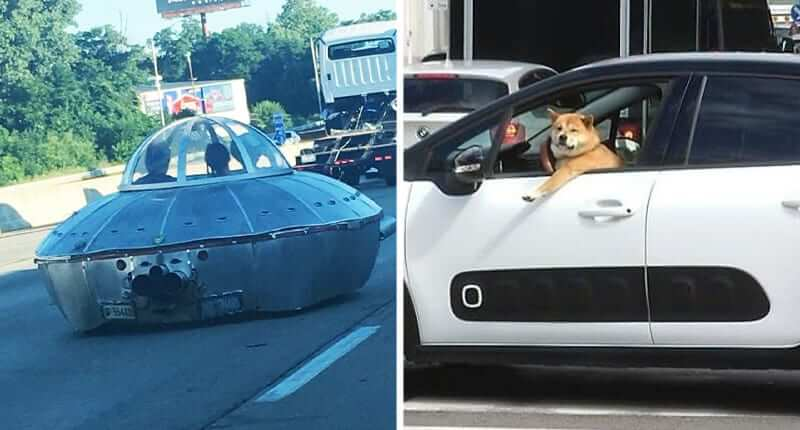40+ Hilarious Photos Of Bizarre Things People Saw While Driving