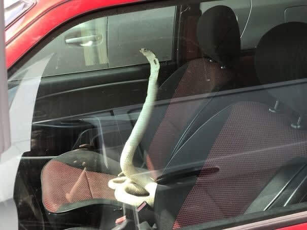 New Kind Of Car Security