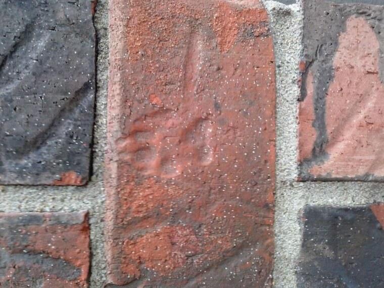 Paw Print On the Bricks Of The Walkway