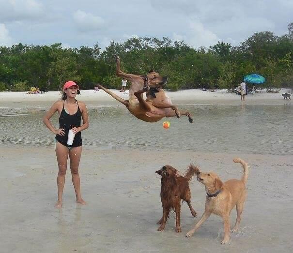 Σκύλος Προσπαθεί Να Πιάσει τη Μπάλα